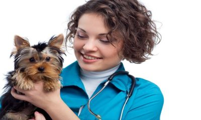 The Top Benefits That Come Along With Pet Boarding in Cincinnati