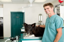 Three Causes of a Stay in a Pet Hospital in Roswell