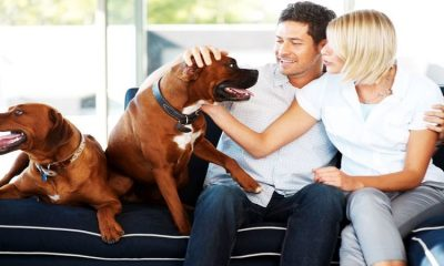 What Can A Pet Owner Expect From A Veterinary Service in Joppa MD?