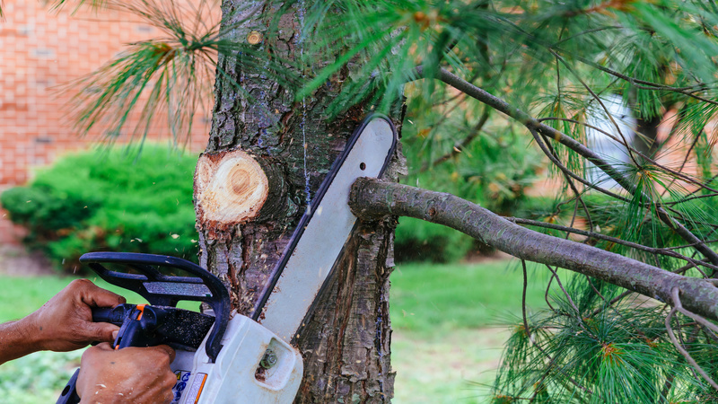 Signs You Might Need to Use an Emergency Tree Service in Decatur