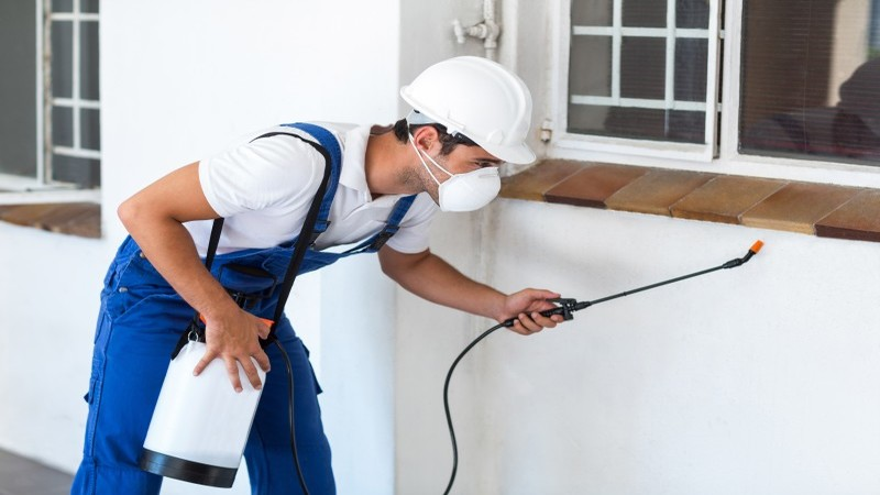Pest worker spraying insecticide below window of house