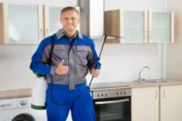 Only Work with Reputable Companies for Pest Control in Newnan GA