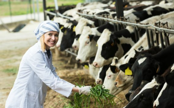 Angus Cattle for Sale – Why This Breed is a Great Investment