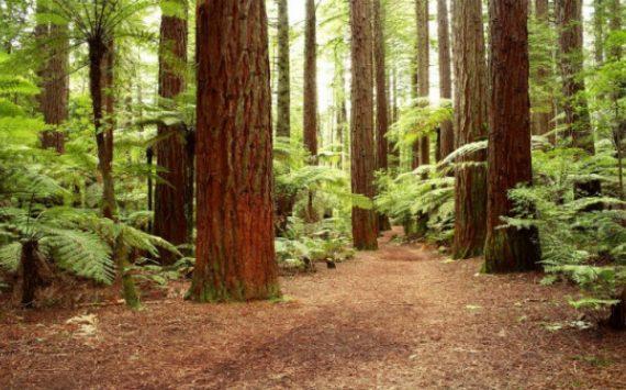 Reasons For Hiring An Arborist in Atlanta GA