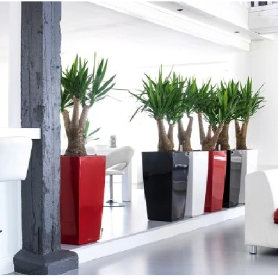 Three Indoor Plants to Consider for Your Interior Landscape in Miami