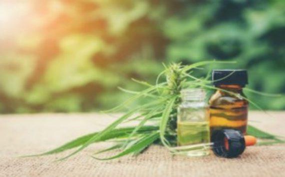 Get Assistance From a Top Company Providing Marijuana Marketing